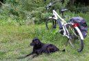 transformer son vélo en vélo électrique